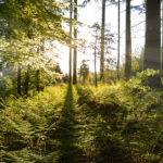 Sunbeams in Spring Forest, Bavaria, Germany